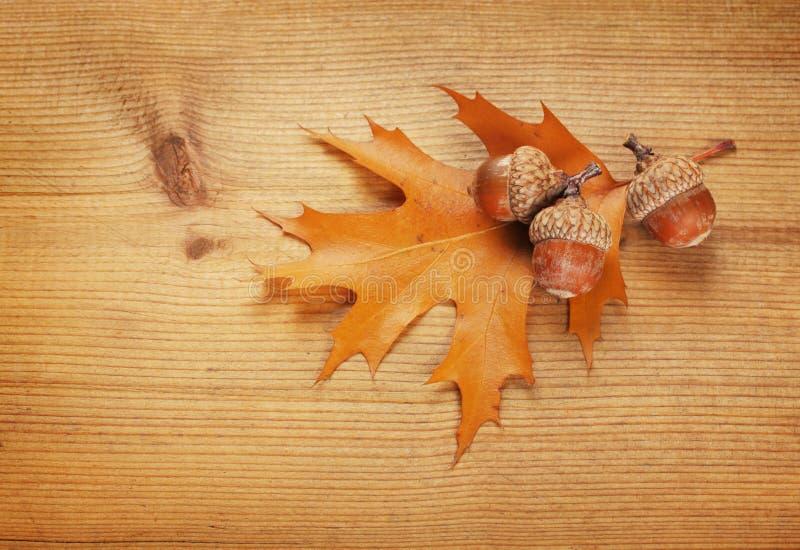Jesieni acorns i liść obraz stock