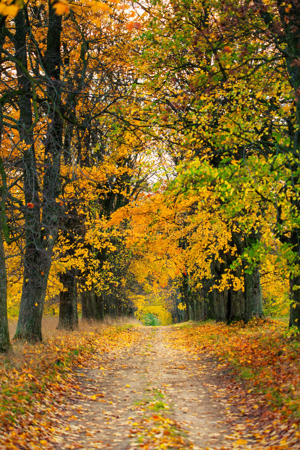 Jesieni aleja obrazy royalty free