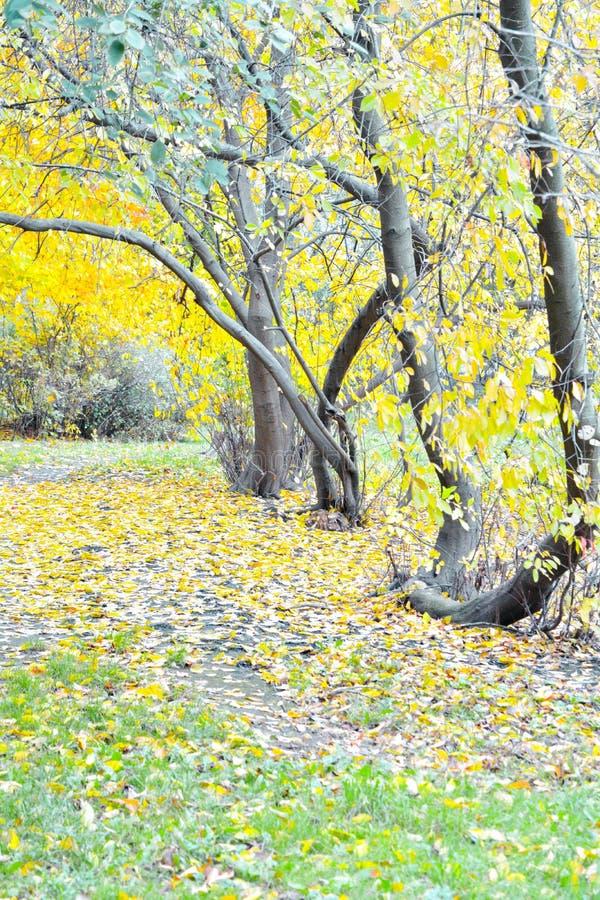 Jesieni aleja w parkowym krajobrazie Park w jesień sezonie zdjęcia stock