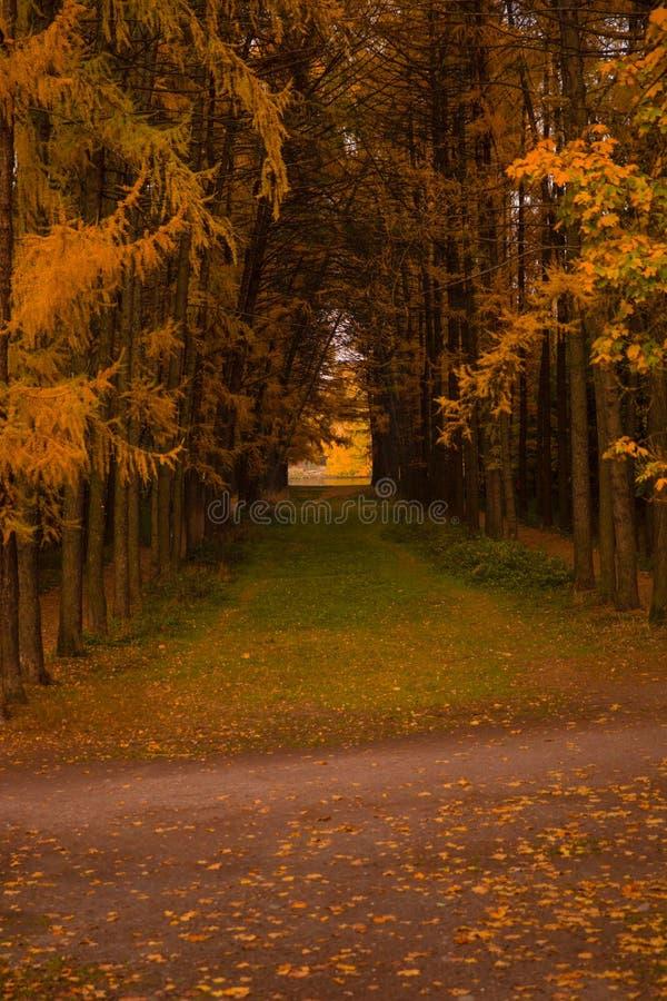 Jesieni aleja zdjęcia royalty free