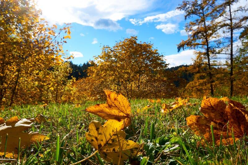 Jesieni Austria krajobrazowy drzewo opuszcza nieba t?o obrazy royalty free
