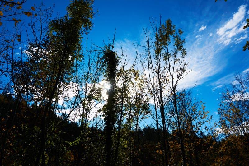 Jesieni Austria krajobrazowy drzewo opuszcza nieba t?o obraz stock