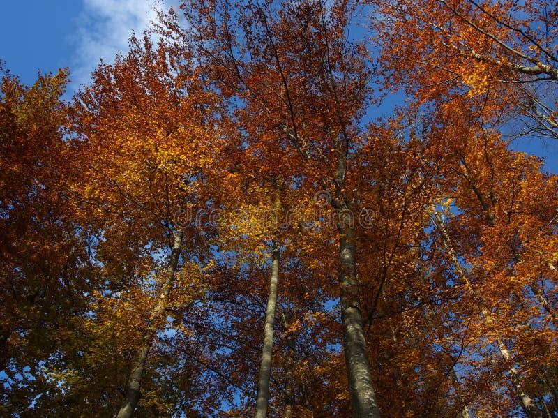 Jesieni błękit i pomarańcze obraz royalty free