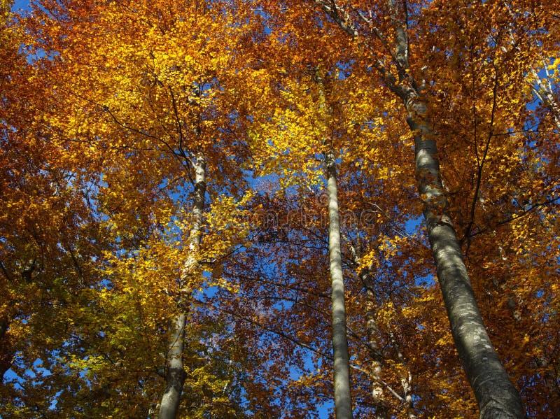 Jesieni błękit i pomarańcze obrazy royalty free