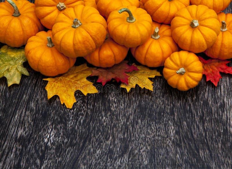 Jesieni bani dziękczynienia tło obraz stock