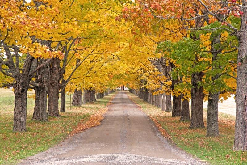 Jesieni barwioni drzewa na długiej ścieżce obraz royalty free