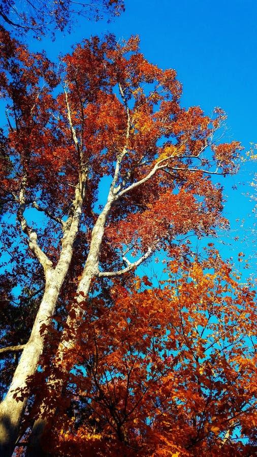 Jesieni busrt obrazy stock
