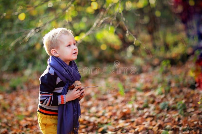 Jesieni chłopiec i jego macierzyści miotanie koloru żółtego liście obraz royalty free