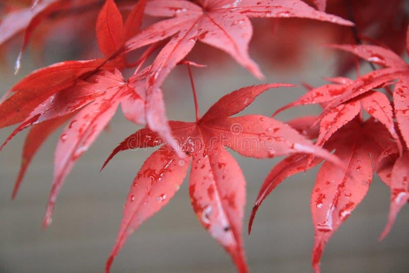 Jesieni Colour obrazy stock