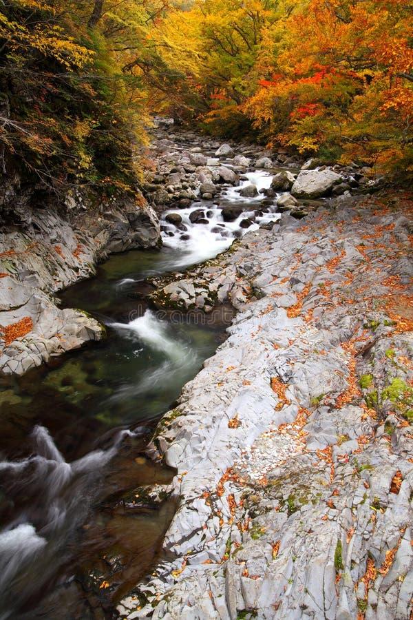 Jesieni colours dolina zdjęcie stock