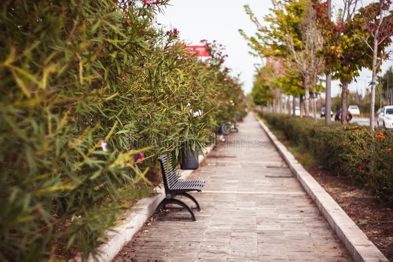 Jesieni colours outdoors, ławka i kwiaty, zdjęcia royalty free