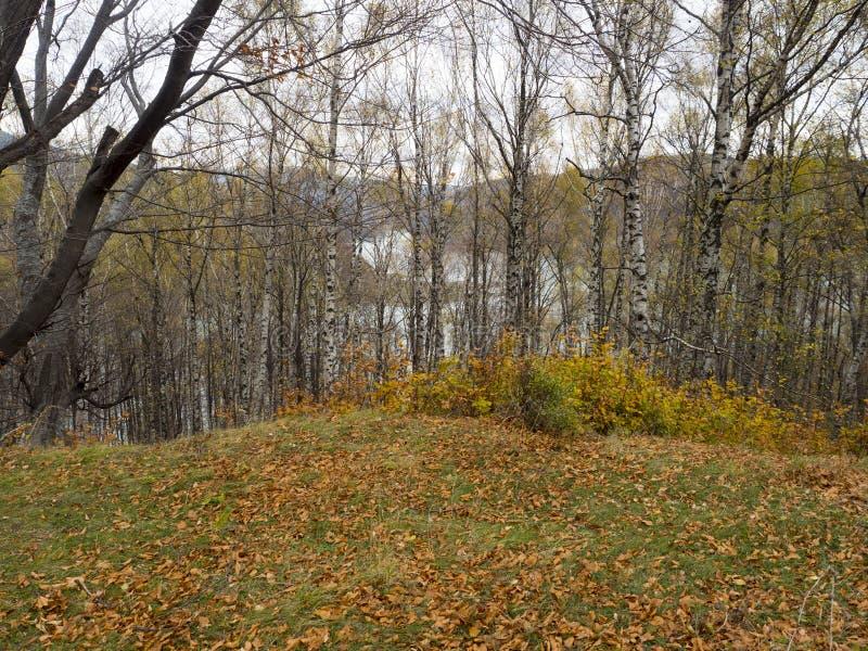 Jesieni colours w Rumunia obraz stock