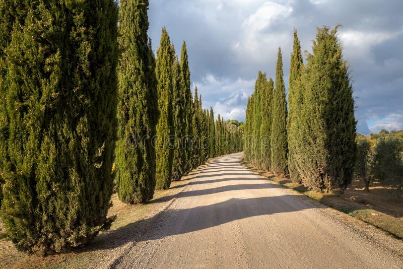 Jesieni cyprysowa droga pod chmurami iluminować położenia słońcem obrazy royalty free