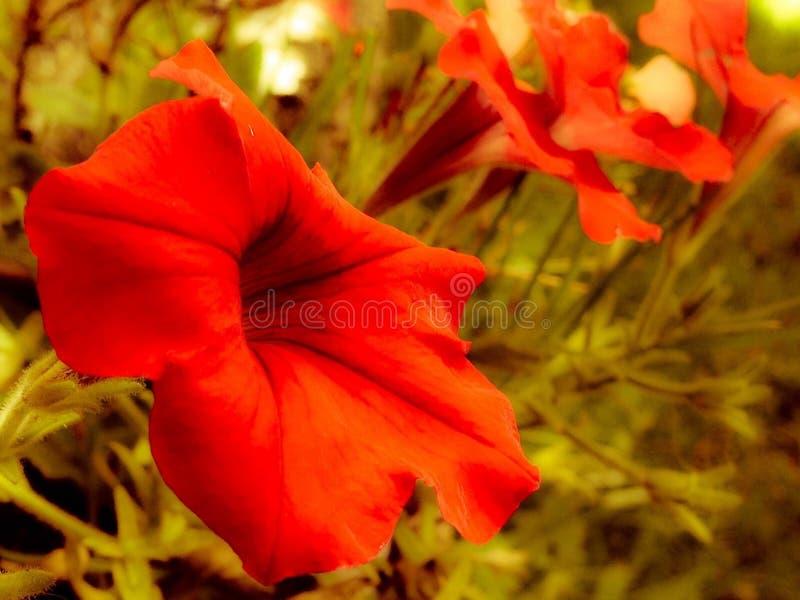 Jesieni czerwieni kwiaty zdjęcia stock