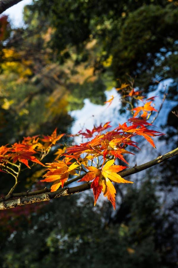 Jesieni czerwieni liść fotografia stock