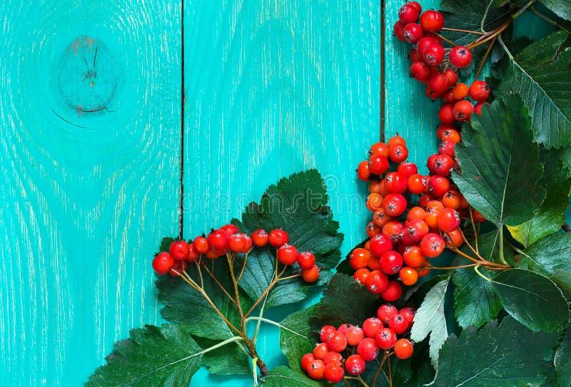 Jesieni drewniany tło z głogowymi jagodami zdjęcie royalty free