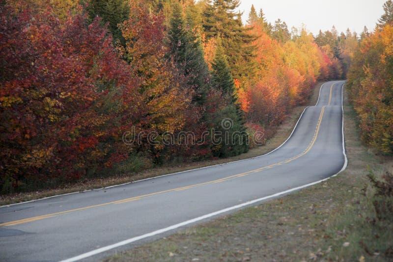 Jesieni droga obraz stock