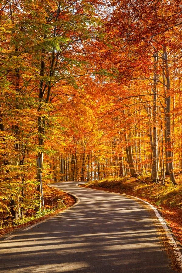 Jesieni droga - uwydatniający kolory obraz stock