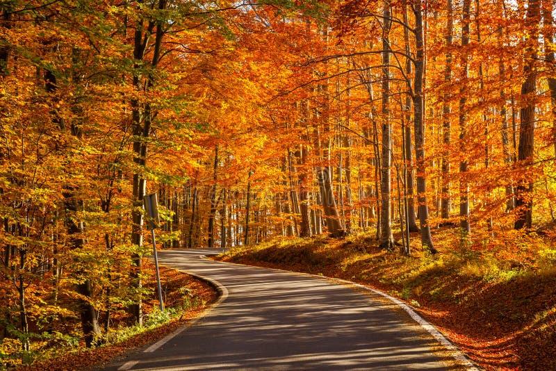 Jesieni droga - uwydatniający kolory fotografia stock