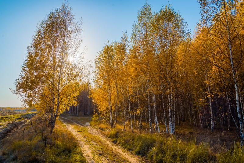 Jesieni droga wzdłuż żółtych drzew fotografia stock