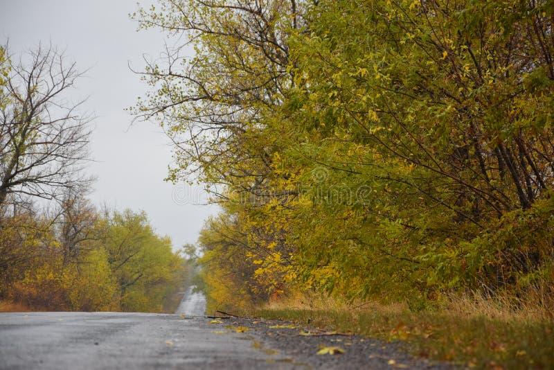 Jesieni drogowy opuszczać w odległość fotografia stock