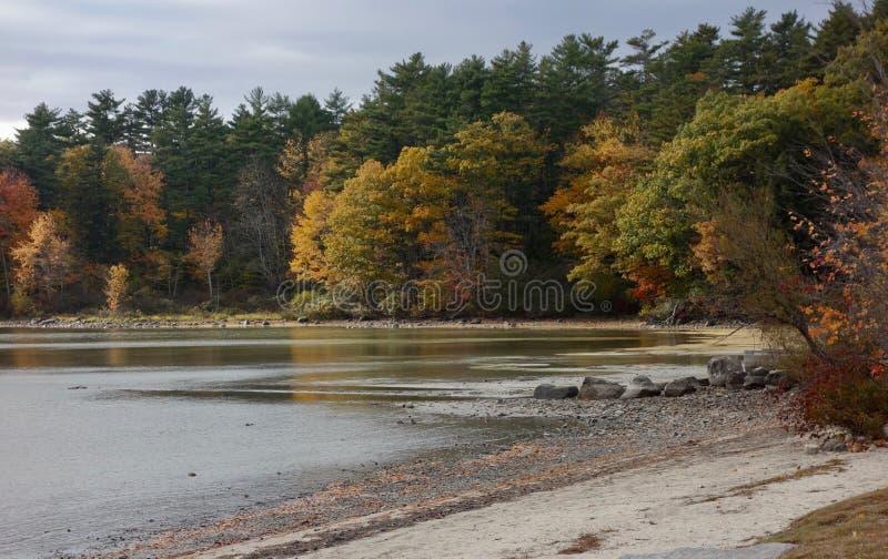 Jesieni drzew brzeg jeziora krajobrazu skał piaska sceniczna plaża fotografia royalty free