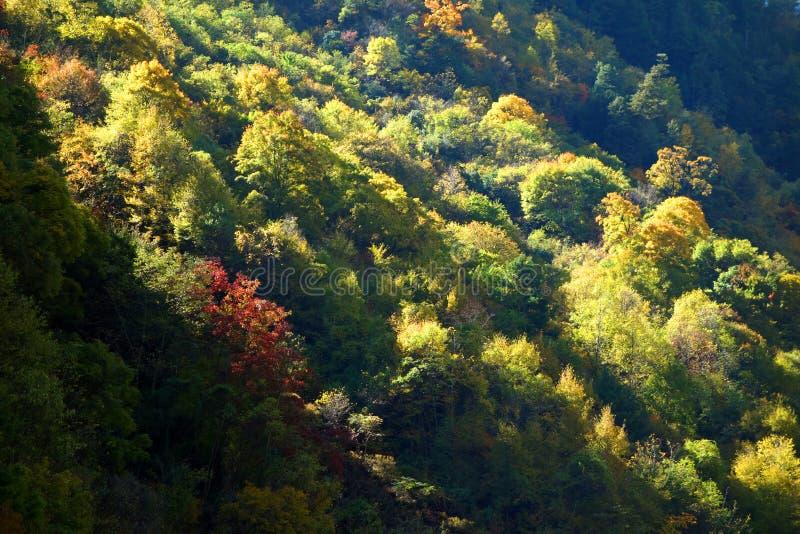 Jesieni drzewa obrazy royalty free