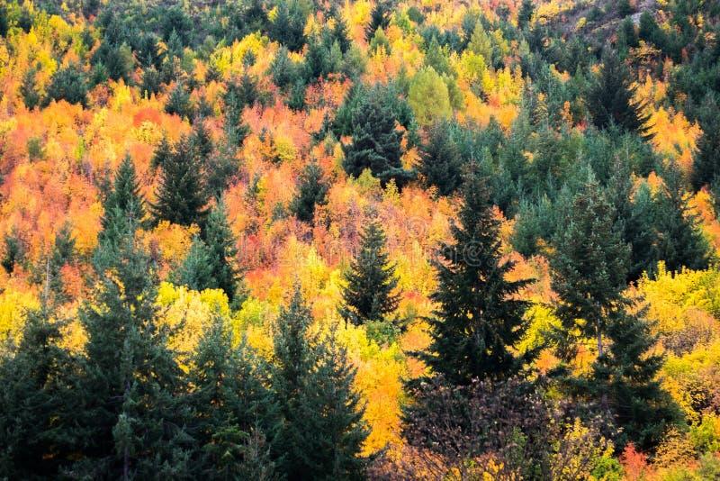Jesieni drzewa Arrowtown, Nowa Zelandia obrazy royalty free