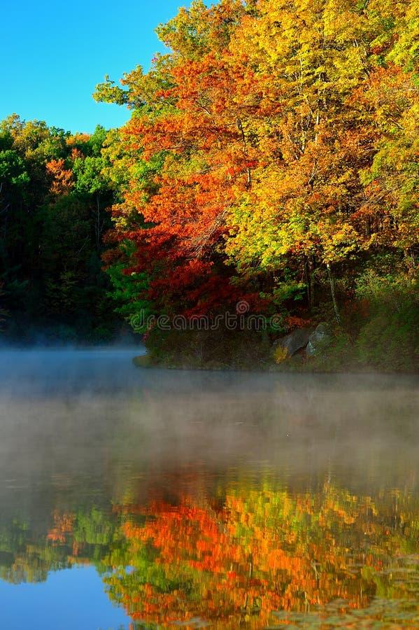 Jesieni drzewa odbijający na mgła zakrywającym jeziorze fotografia royalty free
