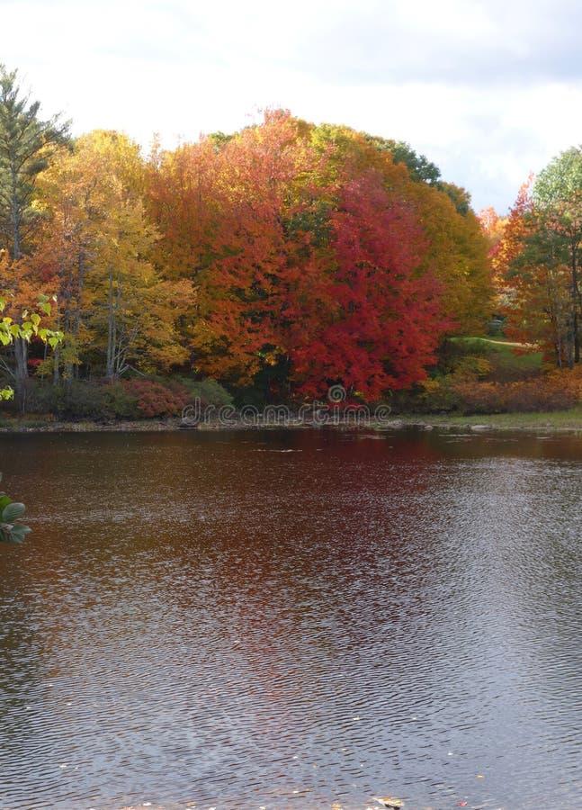 Jesieni drzewa odbijający w pustkowia jeziorze zdjęcie stock