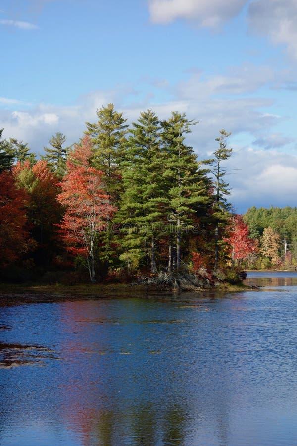 Jesieni drzewa odbijaj?cy w pustkowia jeziorze obrazy stock