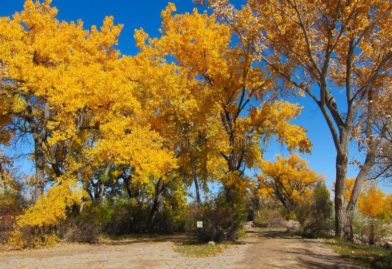Jesieni drzewa przy parkiem obrazy royalty free