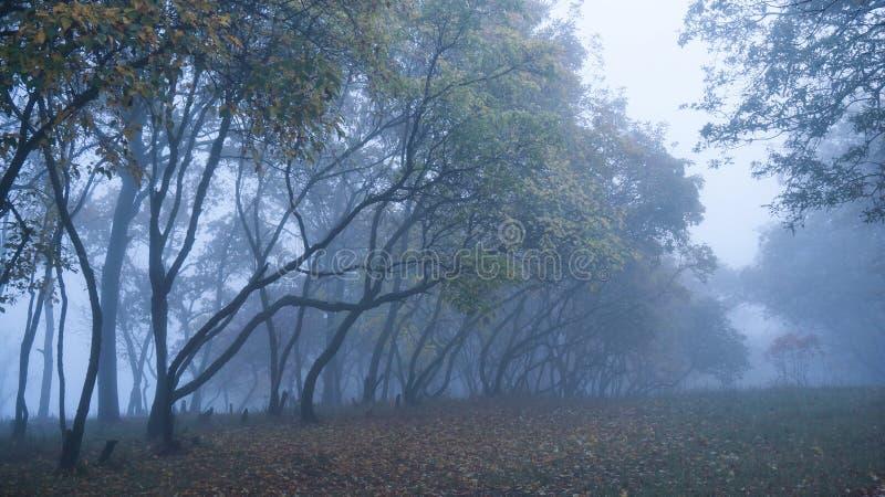 Jesieni drzewa w mgle obrazy stock