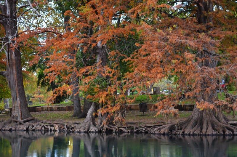 Jesieni drzewa wzdłuż brzeg rzeki fotografia stock