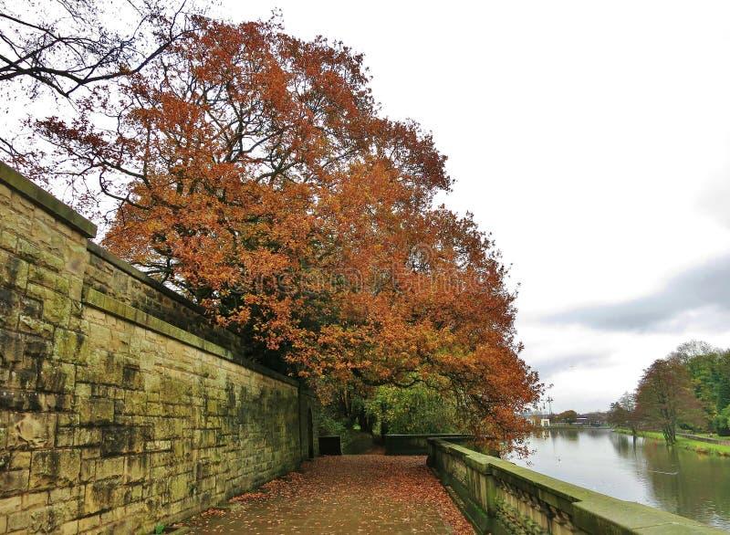 Jesieni drzewo jeziorem fotografia royalty free