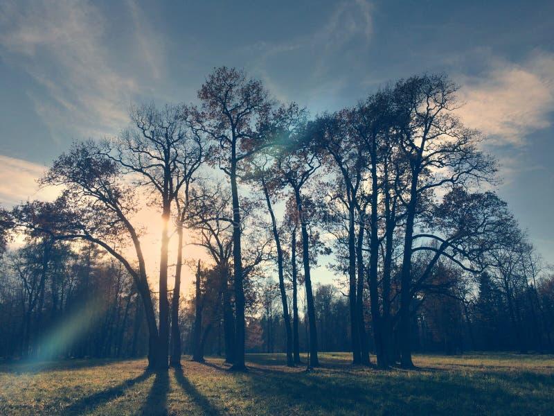 Jesieni drzewo w świetle słonecznym, retro skutek obraz stock