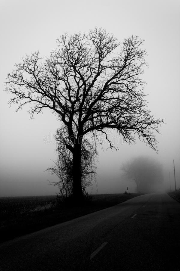 Jesieni drzewo w mgle zdjęcie royalty free