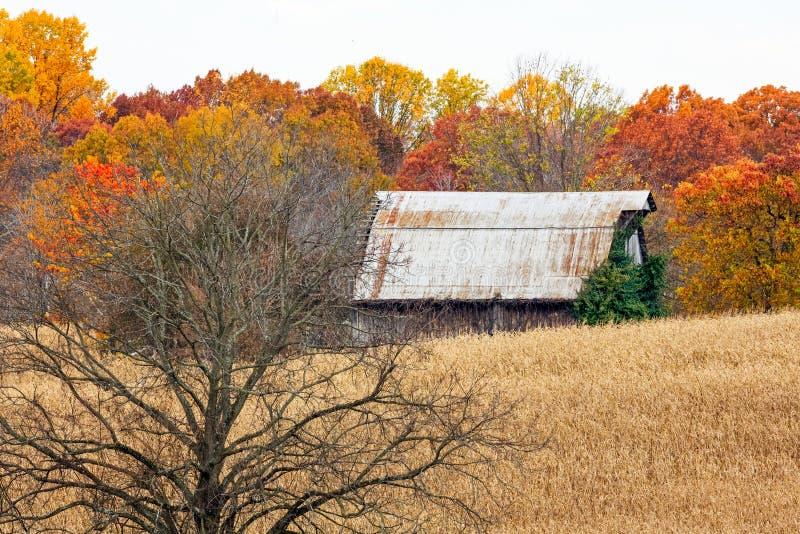 Jesieni drzewo w polu uprawnym i stajnia zdjęcia royalty free