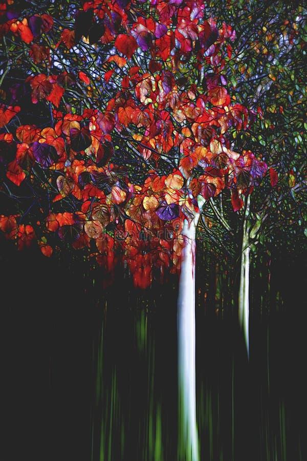 Jesieni drzewo W rewolucjonistce zdjęcie stock