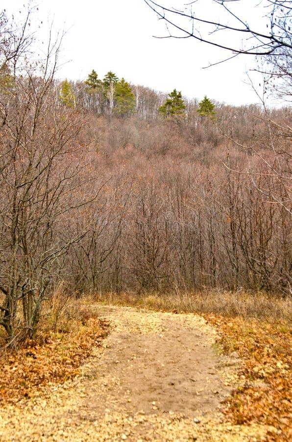 Jesieni gór i lasu niebieskie niebo i kolor żółty trawa fotografia royalty free