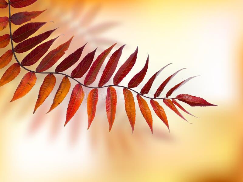 Jesieni gałąź liście fotografia stock