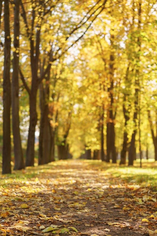 Jesieni grodzka aleja z złotymi spadków drzewami i spadać liśćmi obraz royalty free
