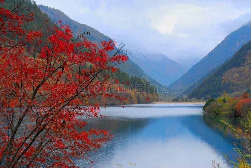 Jesieni jezioro i drzewo obraz royalty free