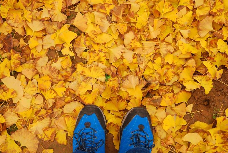 Jesieni kolor żółty liście zdjęcie stock