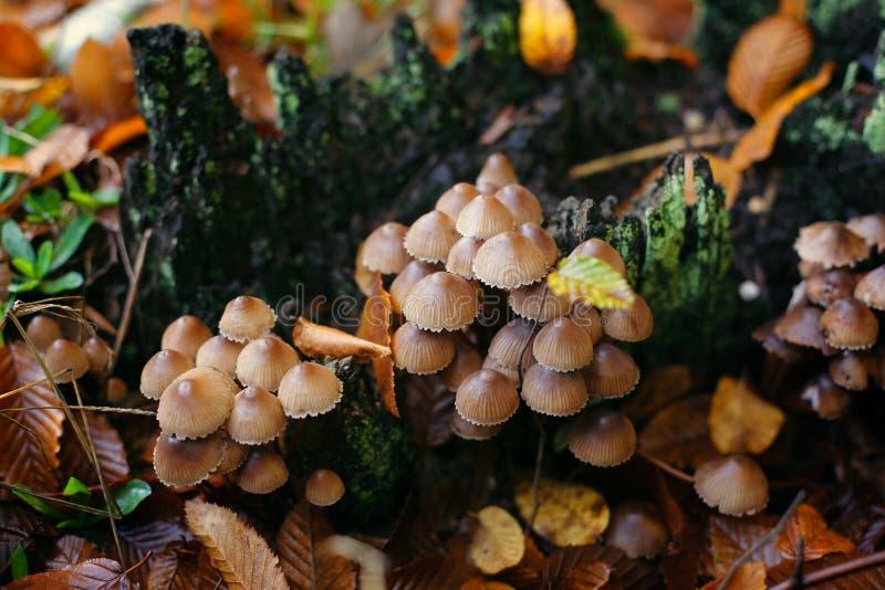 Jesieni kolorowe pieczarki fotografia royalty free