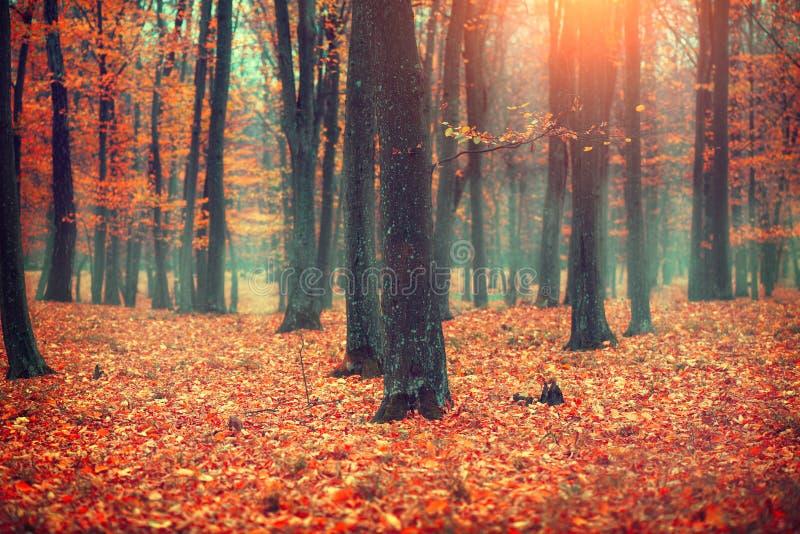 Jesieni krajobraz, drzewa i liście, upadek obrazy royalty free