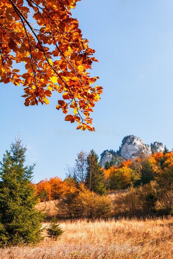 Jesieni krajobraz, skały i drzewa w spadków kolorach, obrazy stock