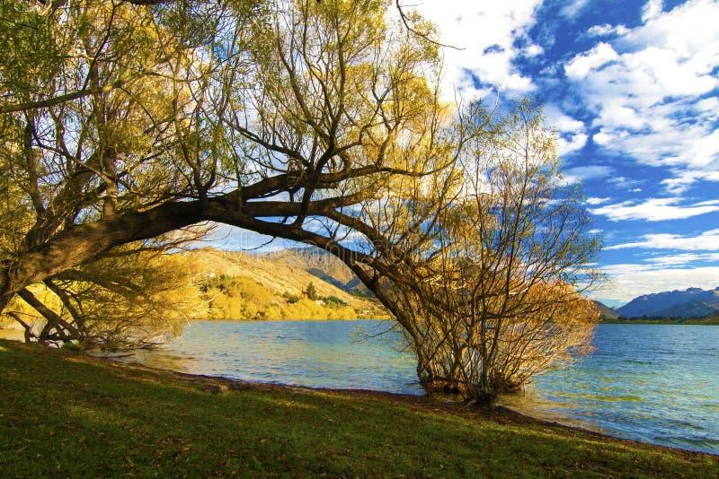 Jesieni krajobrazowa colourful sceneria z drzew, jeziornych i złotych wzgórzami Środkowy Otago region, Jeziorny Hayes, wioska Arr obrazy royalty free