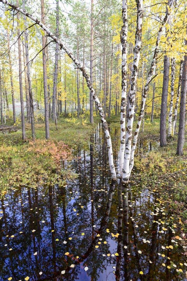 Jesieni krajobrazowa Rosyjska lasowa tundra obrazy stock