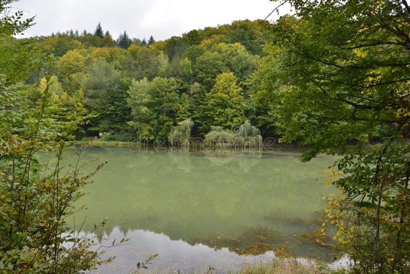 Jesieni krajobrazowi i wierzbowi drzewa przy jeziornym Vida blisko Luncasprie wioski zdjęcie stock